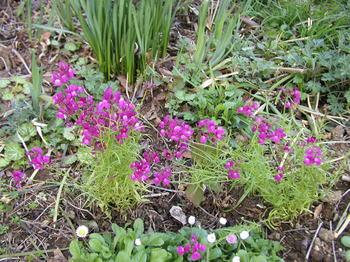 gardeninspring